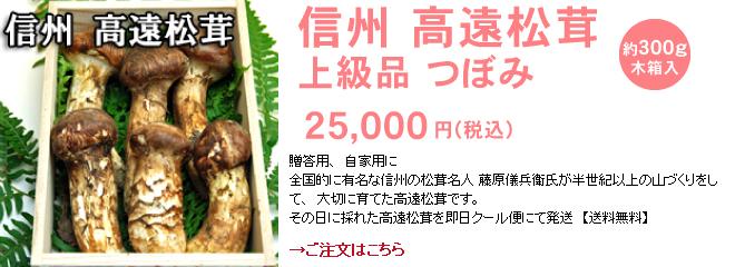 信州 高遠松茸 上級品 つぼみ