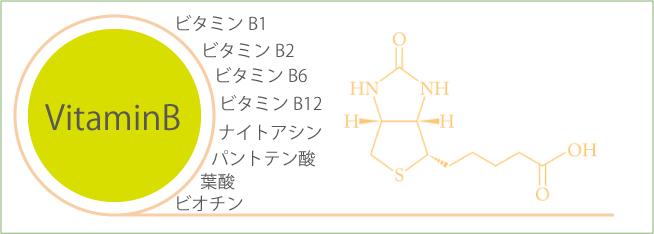 ビタミンb群一覧表
